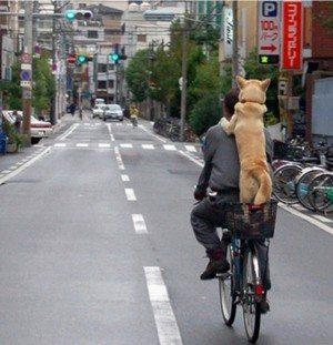 自転車の制限速度導入を検討中