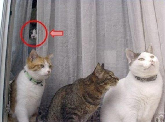 シンガポール Yishun 猫殺し、犯人は複数疑惑?