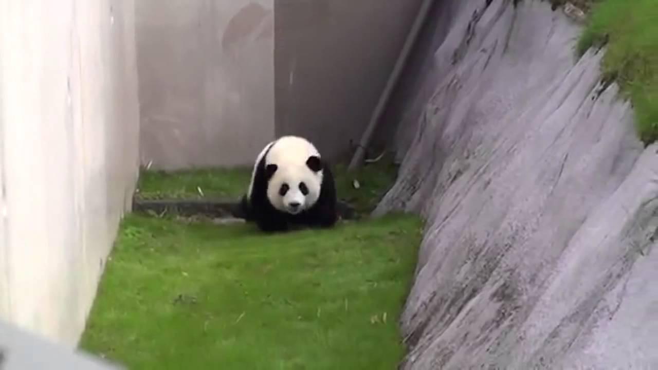 このパンダと飼育員さんのやりとりニヤニヤしてまう、幸せとはこれかな