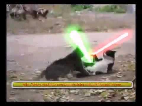【猫ケンカ動画】まさに殺し合いだな