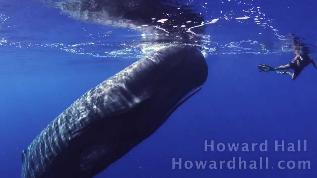 泳いでたらクジラ君に遭遇