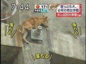 シンガポール20階から飼い猫が落下、助からず…