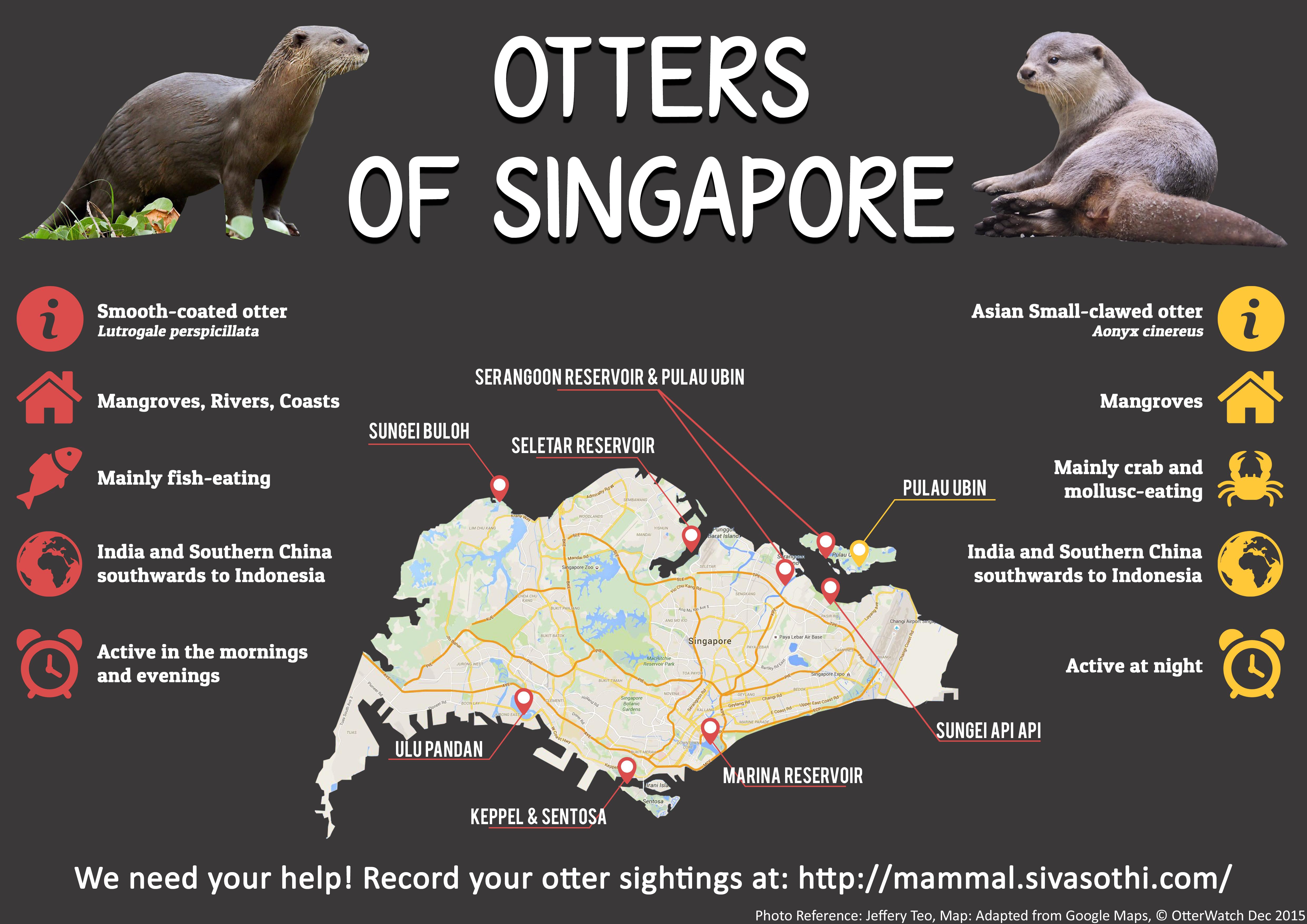 シンガポールに野生カワウソいるんだ!? 知らんかった!