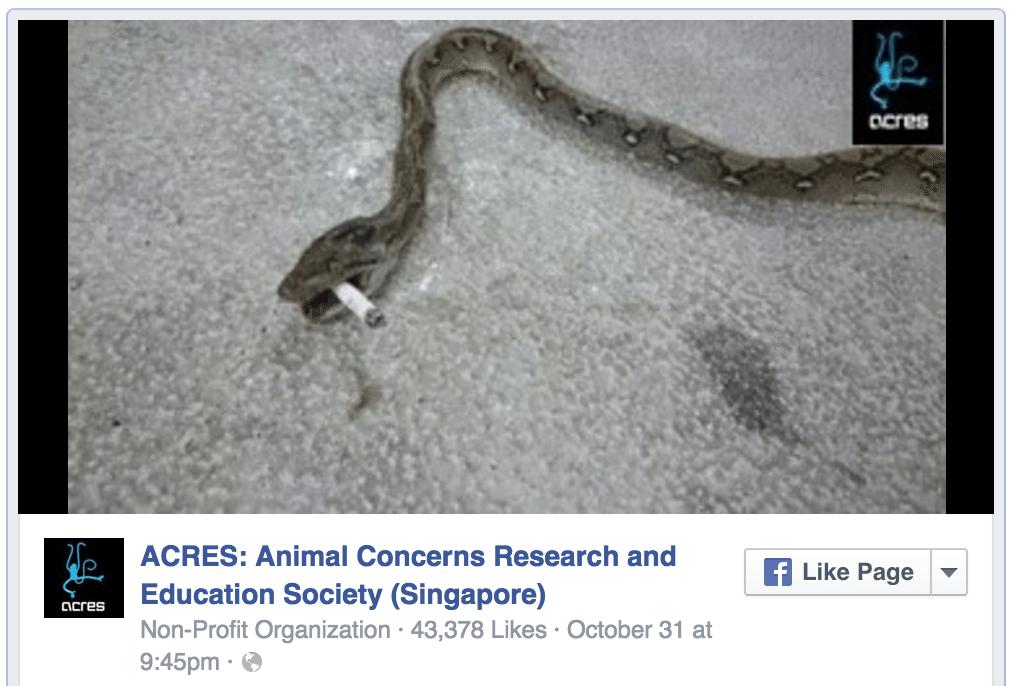 シンガポール虐待されたヘビ、口にはタバコ