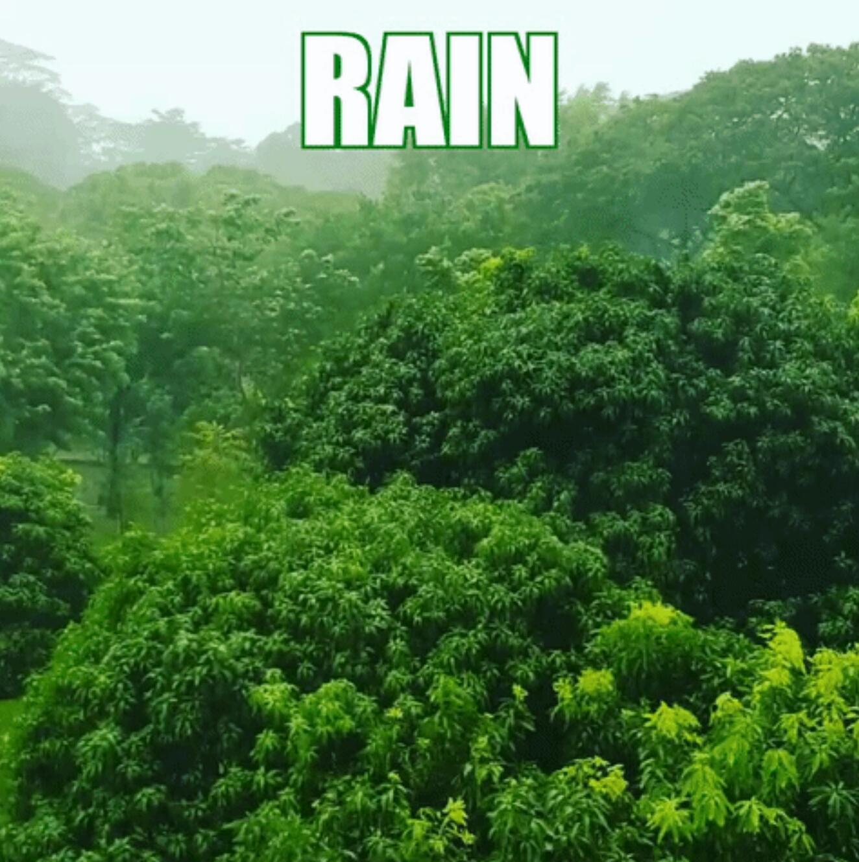 シンガポール、今朝の雨はやばかったね!