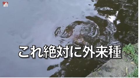 【びっくり動画】  誰だよ!コイツを公園に捨てたのは!?