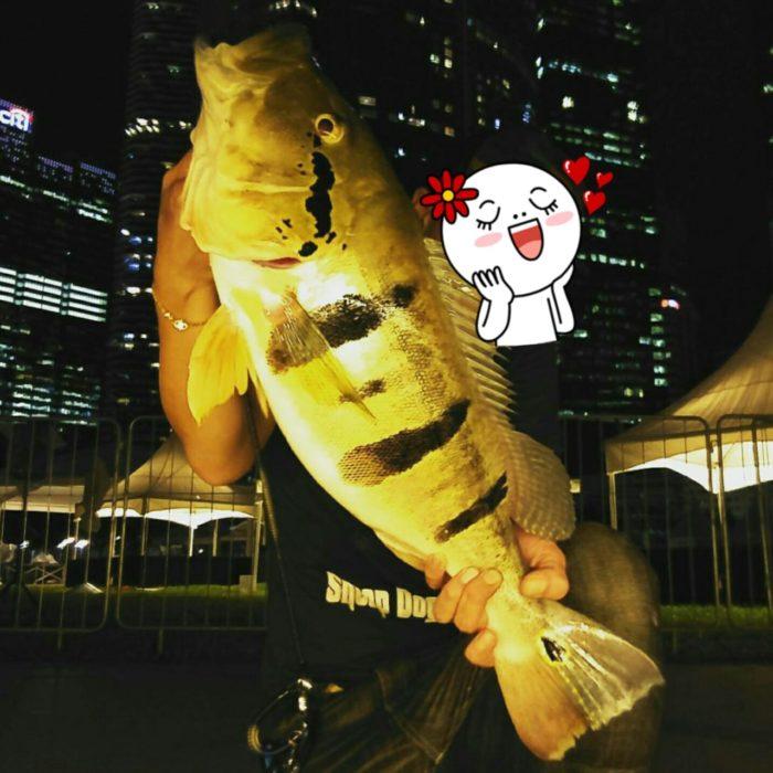 シンガポール魚釣り ピーコックバス